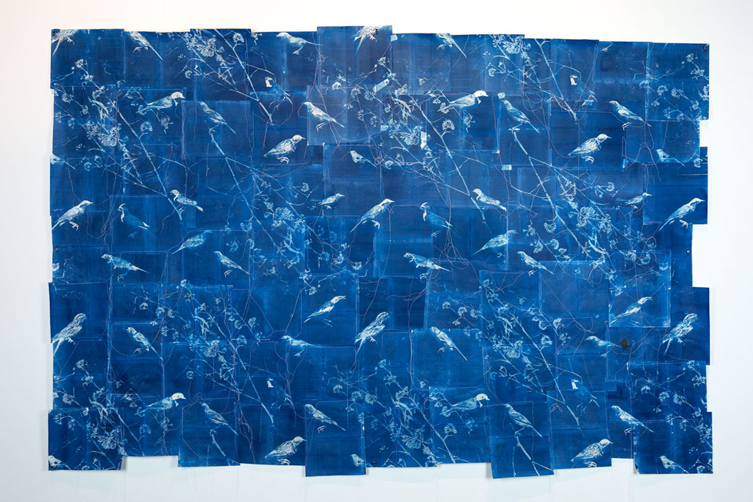 <b>Contested Biography I (Quadrat) 2017</b><br /> installation view<br /> Cyanotype on 1980 edition of Amalie Dietrich: Ein Leben by Charitas Bischoff, stitched, 138 x 216 cm approx.