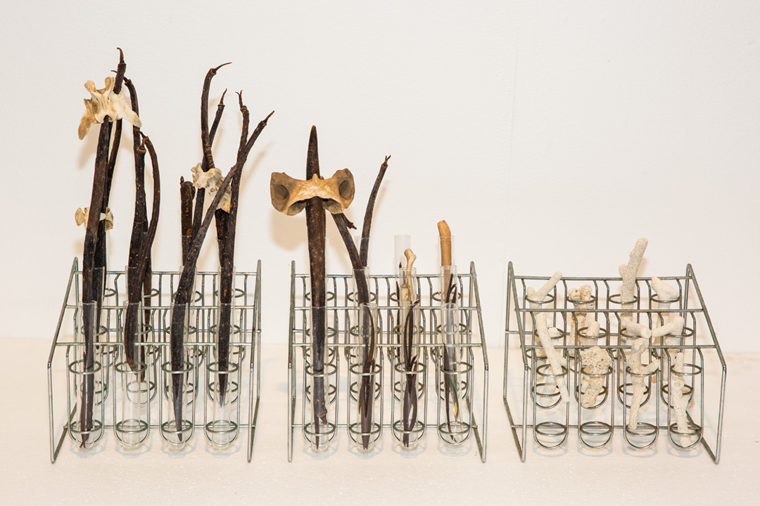 <b>A taxonomy of things (Horseshoe Bay) 2016</b><br /> installation view<br /> Steel test tube holders, glass test tubes, coral, feather, bone, seed pods